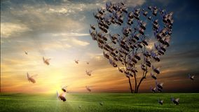 Butterfly heart shaped tree at sunset with nice sky sunset royalty free stock photography