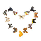 Butterfly heart sharp frame Stock Image