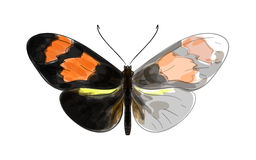 Butterfly Heliconius. vector illustration