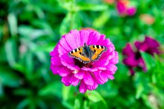 Butterfly hives Royalty Free Stock Photography