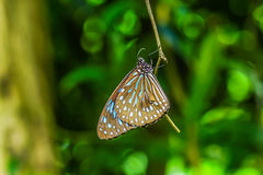 Butterfly holding on branch Royalty Free Stock Photography
