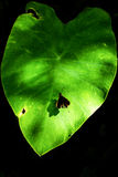Butterfly holding on green leaf with black tone background Royalty Free Stock Images
