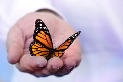 Butterfly holding in hand. Butterfly holding in a hand royalty free stock images