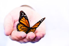 Butterfly holding in hand. Butterfly holding in a hand royalty free stock image