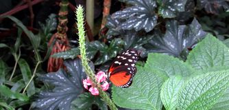 Butterfly. The house of the butterflies in Mainau Stock Photos