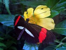 Butterfly. The house of the butterflies in Mainau royalty free stock photo