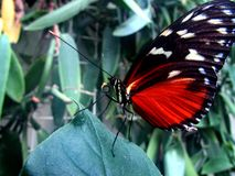 Butterfly. The house of the butterflies in Mainau stock photography