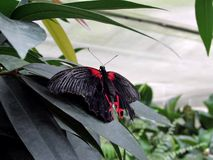 Butterfly. The house of the butterflies in Mainau royalty free stock image