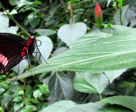 Butterfly. The house of the butterflies in Mainau stock photo