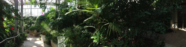 Butterfly house. Greenhouse plants vacation travel Dallas Texas green panorama trees foliage Stock Photo