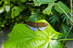 Butterfly House of Villa Garzoni - Lucca, Italy Royalty Free Stock Images