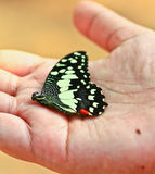 Butterfly in human hand Royalty Free Stock Image