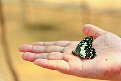 Butterfly in human hand Royalty Free Stock Photos
