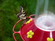 Butterfly on a Hummingbird Feeder Stock Images