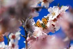Butterfly Ibiza. Butterfly in Santa Agnès Ibiza Royalty Free Stock Photography