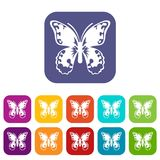 Butterfly icons set Royalty Free Stock Photos