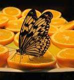 Butterfly Idea Levkonoya on orange. And dark background stock photos