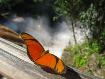 Butterfly, Iguazu Falls Stock Photos