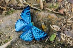 Butterfly at Iguazu Falls, Argentina Stock Photos