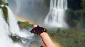 Butterfly at Iguazu Falls Waterfall with Rainbows and Spray as seen from the Brazil Side. Iguazu Falls Waterfall with Rainbows and Spray as seen from the Brazil Stock Image