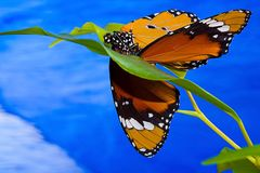 Butterfly II Royalty Free Stock Photography