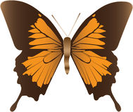 Butterfly illustration Royalty Free Stock Photography