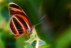 Butterfly Illustration Royalty Free Stock Photos