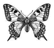 Butterfly illustration, engraving, drawing, ink Stock Photos