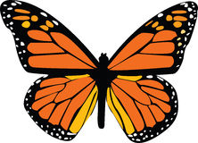 Butterfly illustration Royalty Free Stock Images