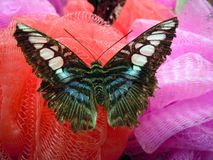 Butterfly. An image of a beautiful butterfly Stock Photos