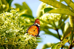 Butterfly. This image shot at indore zoo, mp india Stock Photo