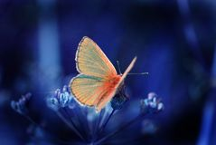 Free Butterfly In The Night Stock Photo - 1032440