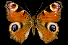 Butterfly, Inachis Io Stock Photography