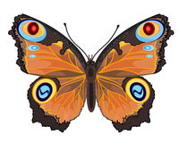 Butterfly Inachis io Royalty Free Stock Photography