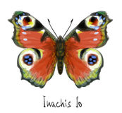 Butterfly Inachis Io. Watercolor imitation. Stock Image