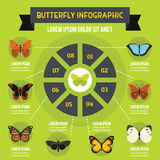 Butterfly infographic concept, flat style. Butterfly infographic banner concept. Flat illustration of butterfly infographic vector poster concept for web Stock Photos