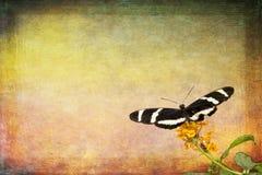 Butterfly Inivitation Stock Photos