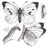 Butterfly ink drawing.Vector Royalty Free Stock Images