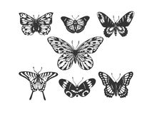 Butterfly insect animal engraving vector Royalty Free Stock Image