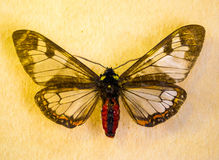Butterfly insect Royalty Free Stock Images