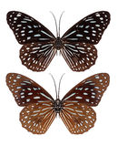 Butterfly insect isolated Stock Photos