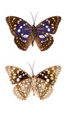 Butterfly insect. Top and bottom view insect butterfly isolated Royalty Free Stock Photography