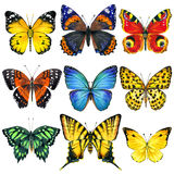 Butterfly Insects Isolated. Watercolor Illustration Stock Photography