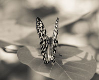 Butterfly at an interesting angle Stock Images