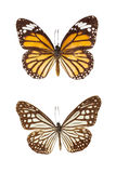 Butterfly Isolate Stock Photos