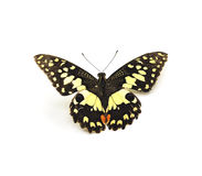 Butterfly. Isolate on white background Stock Photos