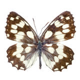 Butterfly isolated Royalty Free Stock Photos