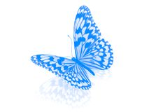 Butterfly. Isolated. Royalty Free Stock Photo