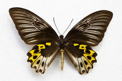 Butterfly isolated. Close up photo of isolated butterfly Stock Photos