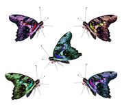 Butterfly isolated collage Royalty Free Stock Photos
